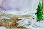 Das Kinderbuch von Canis, der kleine weiße Wolf - Kindermärchen